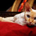 Jak przygotować mieszkanie na przybycie kota?
